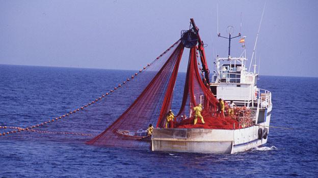 Audio «Bund verbietet Einfuhr von illegal gefangenen Fischen» abspielen