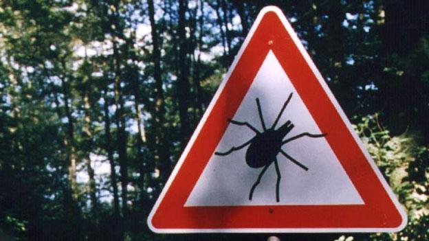 Schutz vor Zecken: «Spray allein reicht nicht»