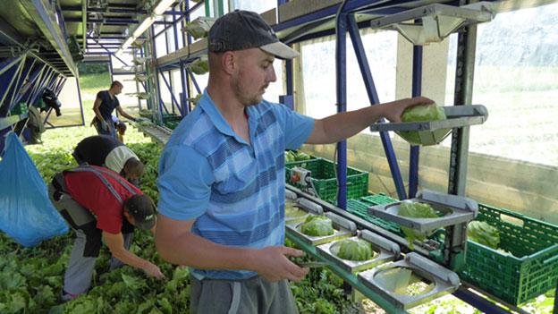 Mehr Gemüsegärtner braucht das Land