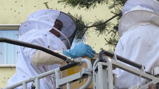 Bienen halten die Feuerwehr auf Trab