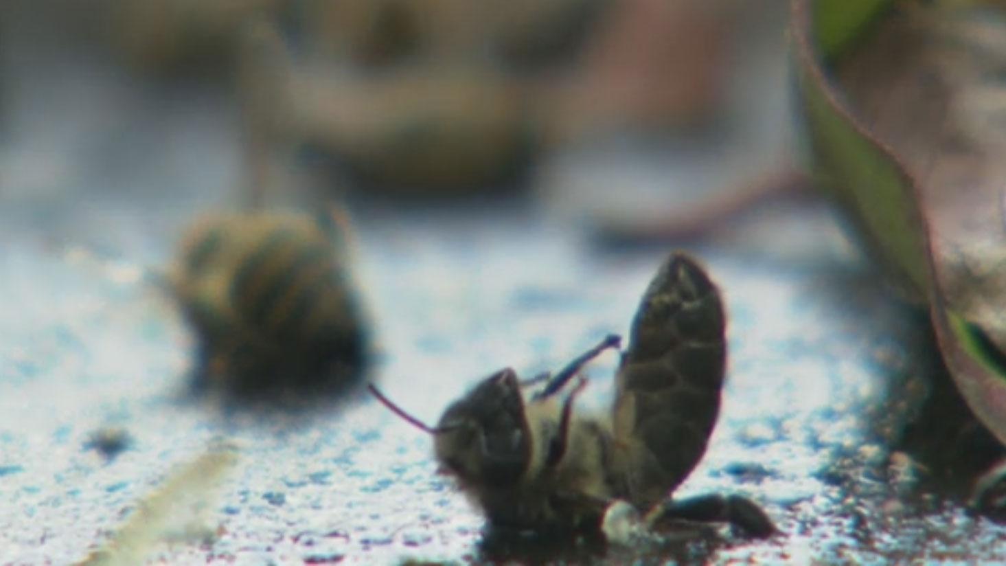 Migros wegen Bienenschutz-Versprechen in der Kritik