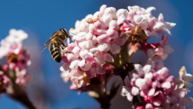Sind Saatgut-Pestizide gefährlicher als angenommen?