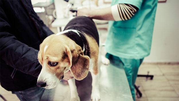 «Darf ein Hundebesitzer sich weigern, Überstunden zu machen?»
