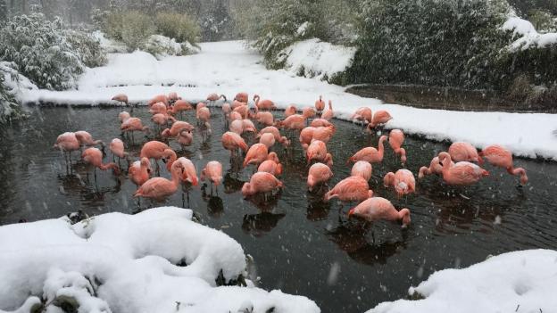 Zoo der Zukunft – weniger Tiere, mehr Artenschutz