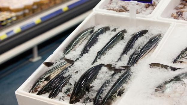 Gegen illegalen Fischfang: Schweiz verschärft Kontrollen