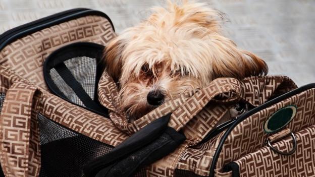Audio «Warum ist Zugfahren für Hunde teurer als für Kinder?» abspielen