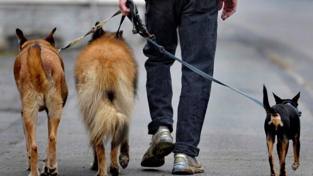 Audio «Rechtsfrage: «Dürfen Kinder ein Hundesitting anbieten?»» abspielen.