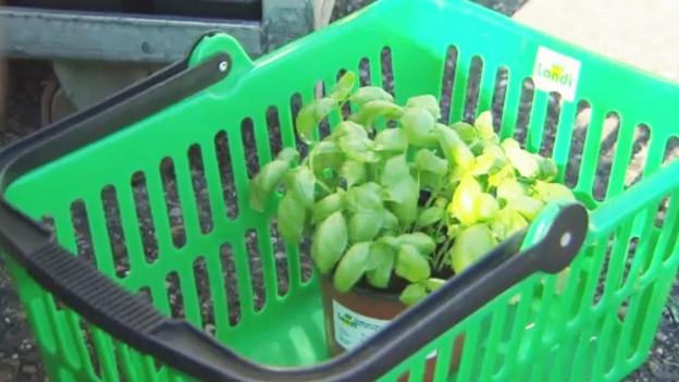 Audio ««Espresso Aha!»: Gibt es auch Garantie auf Pflanzen?» abspielen