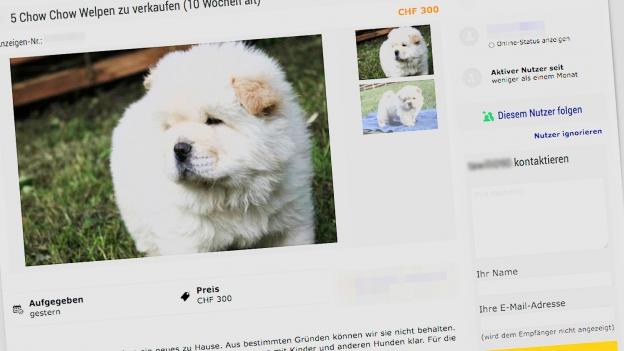 Auf Onlineplattformen «wimmelt» es von unseriösen Tierinseraten