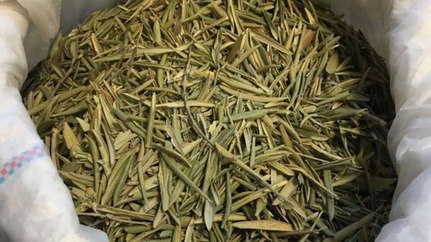 Olivenblätter – der alternative Gerbstoff für Leder