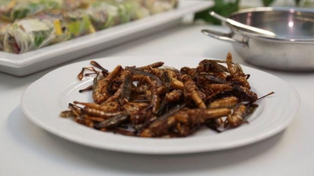 «Espresso» möchte von Ihnen wissen: Essen Sie Insekten?