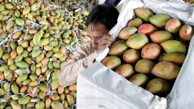 Mangos: Grosse Unterschiede bei der Ökobilanz