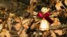 Audio «Teil 1: SRF-Weihnachtskrimis» abspielen