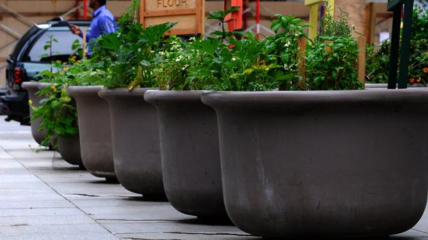 Urban Gardening – das grüne Stadtphänomen