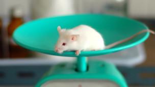 Audio «Wozu braucht es Tierversuche?» abspielen.