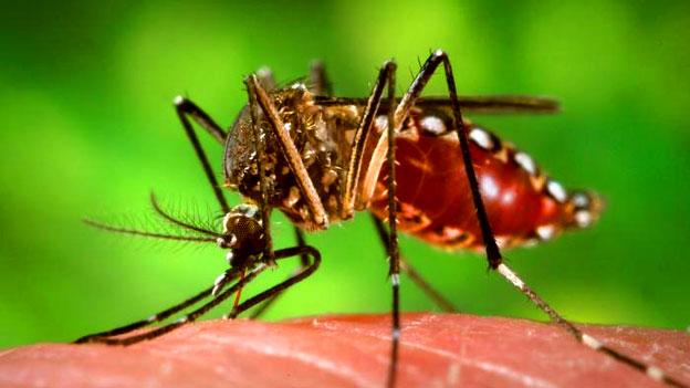 Denguefieber