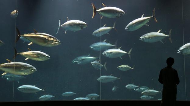 Können Fische Schmerzen empfinden?