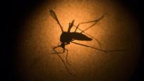 Audio «Zika» abspielen