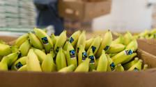 Audio «Viele offene Fragen zur Umsetzung der Fairfood-Initiative» abspielen.