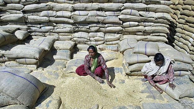 Getreideberge im indischen Gliedstaat Haryana verschimmeln