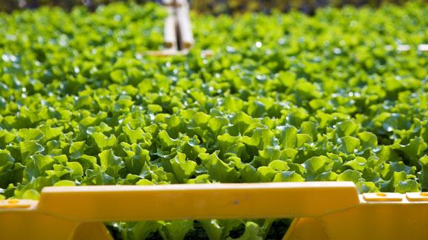 Ventilklausel: Ein Problem für Gemüsebauern