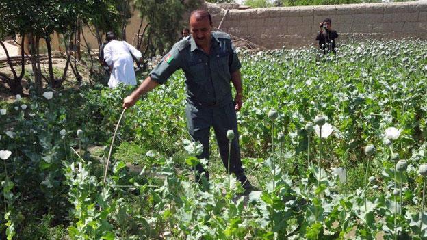 Mehr Opium aus Afghanistan