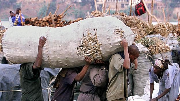 Virus bedroht Maniok-Pflanzen in Afrika