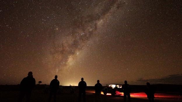 Schädling «Pferd»: Australien macht Jagd auf Wildpferde
