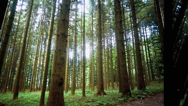Europäischer Wald nützt dem Klima mehr als gedacht