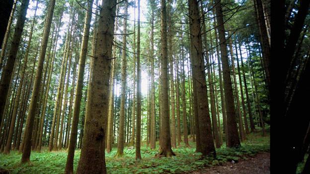 Audio «Europas Wälder nützen dem Klima mehr als gedacht» abspielen.