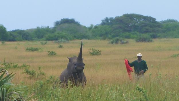 Die Umsiedlung der Nashörner