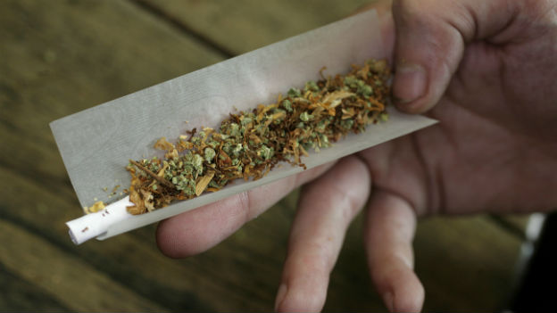 Steigender THC-Gehalt im Cannabis beschäftigt Fachleute
