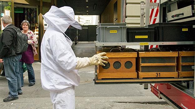 Bienen im Dichtestress