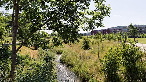Mehr Ackerland für Landwirtschaftsbauten als für Gewässerschutz