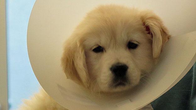 Illegaler Hundehandel im Fokus