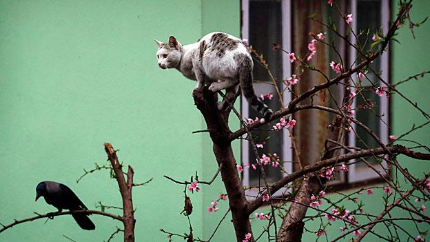 Hauskatzen erfolgreich auf Vogeljagd
