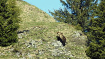 Audio «Kanton Bern: Wappentier gesichtet» abspielen