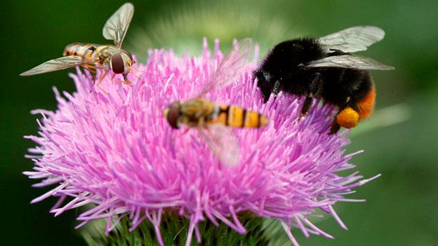 Insektenrückgang auch in der Schweiz