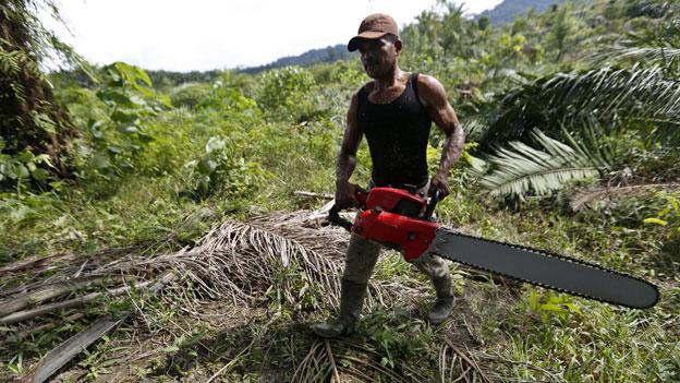 Keine Palmöl-Importe aus Indonesien