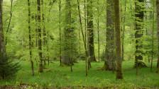 Audio «Waldgesetz versus Zersiedelungs-Initiative» abspielen.