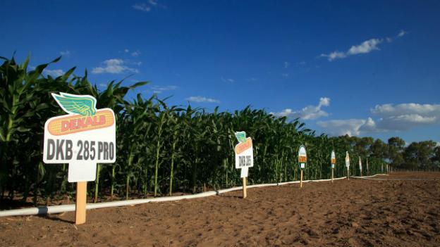 Der «Marsch against Monsanto»