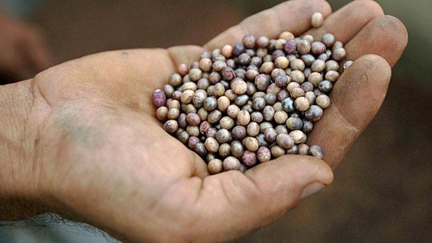 Die Lebensmittelherstellung neu erfinden?