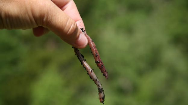 Was Regenwürmer im Winter machen