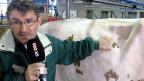 «Diese Kuh hat vor einiger Zeit eine Rippe gebrochen»: Der ETH-Agronom kann in Sekundenschnelle einschätzen, wie der Zustand einer Kuh ist.