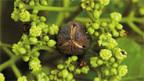 Das Öl aus den Samen der Jatropha-Pflanze lässt sich zu Biodiesel weiterverarbeiten
