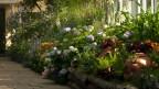 Der Garten von Emily Dickinson, nachempfunden vom Botanischen Garten in New York: Dickinson war zu Lebzeiten berühmter für ihren Garten als ihre Gedichte.