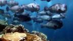 Die Bilder vom Fischreichtum im Meer werden seltener.