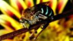 Fleissige Bienen sind auch ein ökonomischer Faktor.