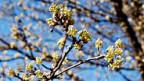 Frühes Frühlingsgefühl dank wärmerem Klima.