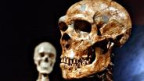 Schädel eines Neandertalers.